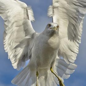 Angel Wings by Harold Begun (HaroldBegun)) on 500px.com