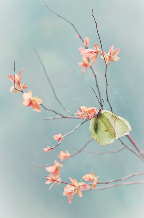 Photograph Japanese Whispers by Magda Wasiczek on 500px