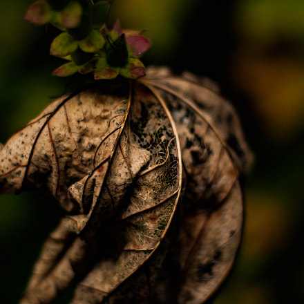 Withering leaf