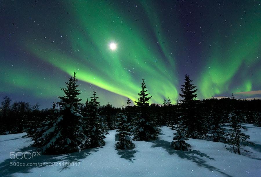 Photograph Winter Night by Arild Heitmann on 500px