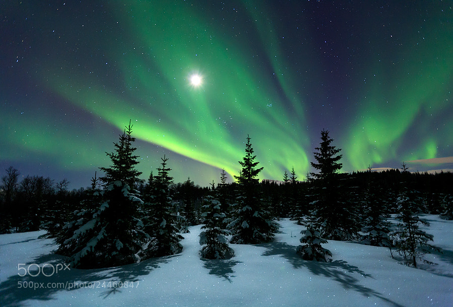 Photograph Winter Night by Arild Heitmann on 500px