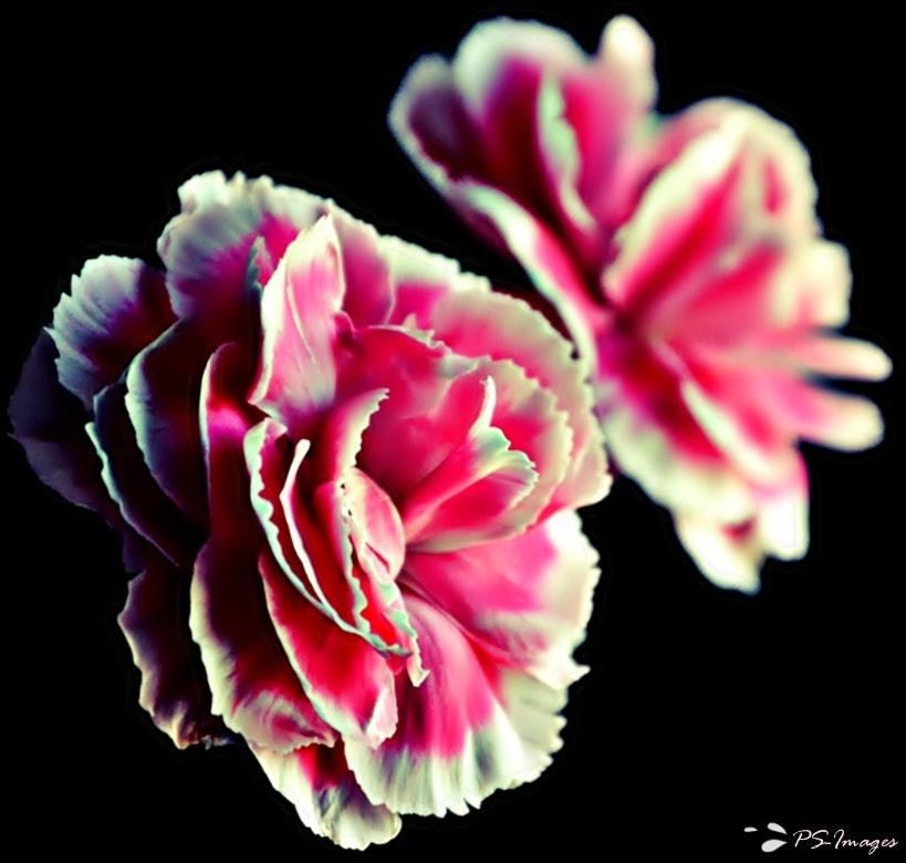 Photograph Beauty of Flower by prince sharma on 500px