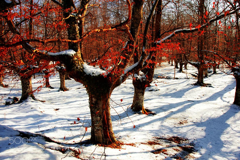 Photograph snow & sun by kiminur lurra on 500px