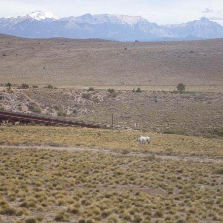 White horse in meadow, Sony DSC-W350