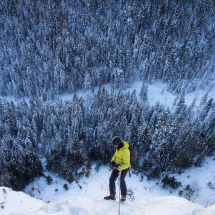 Viewing the forest from the icefall