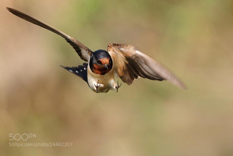 Photograph Swifts by Tea Maeklong on 500px