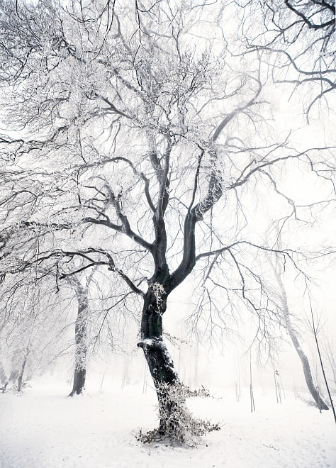 Photograph Winter Queen by Botond Horváth on 500px