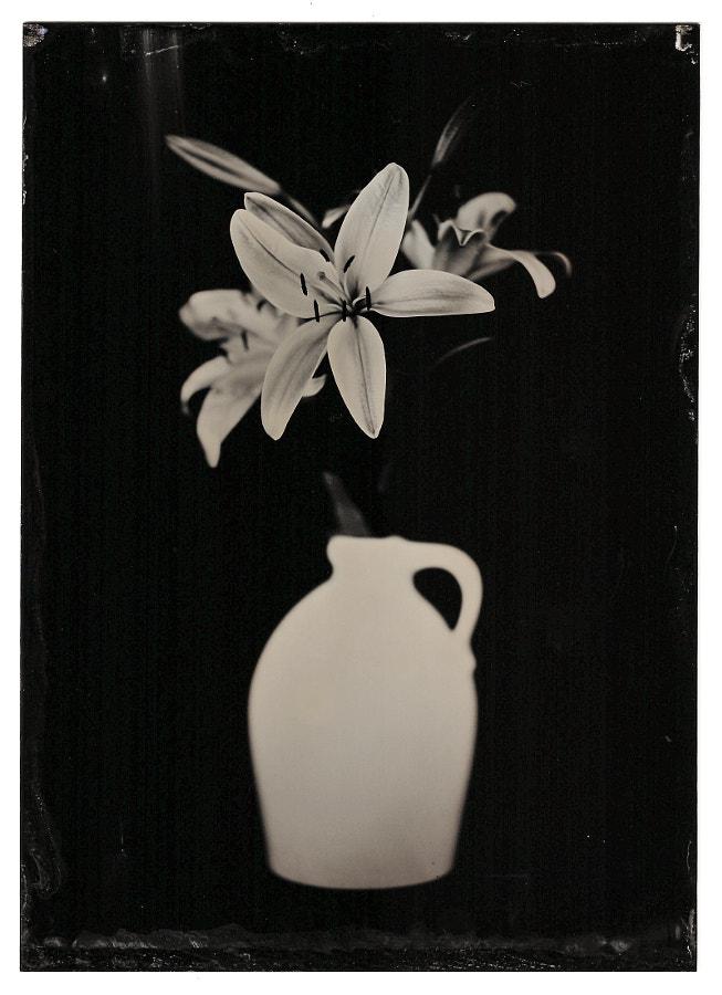 Lillies 1.31.18