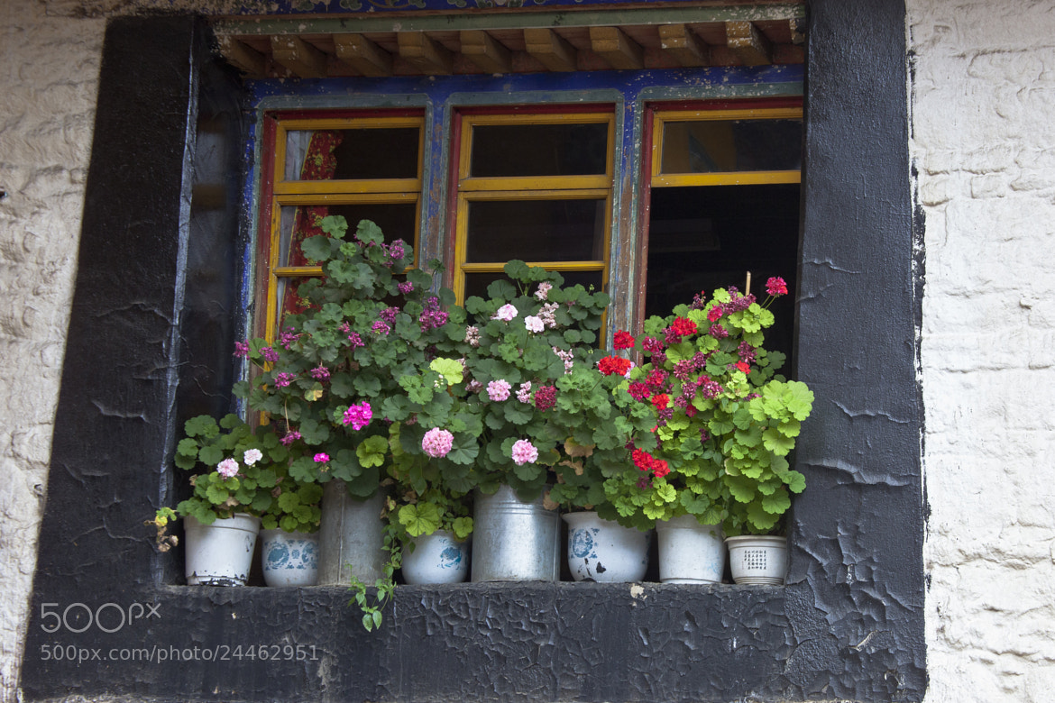 Photograph Window by sk teh on 500px