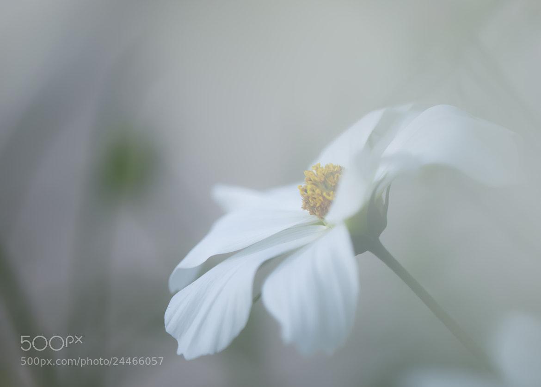 Photograph Vestiges by Hideaki Yoshida on 500px