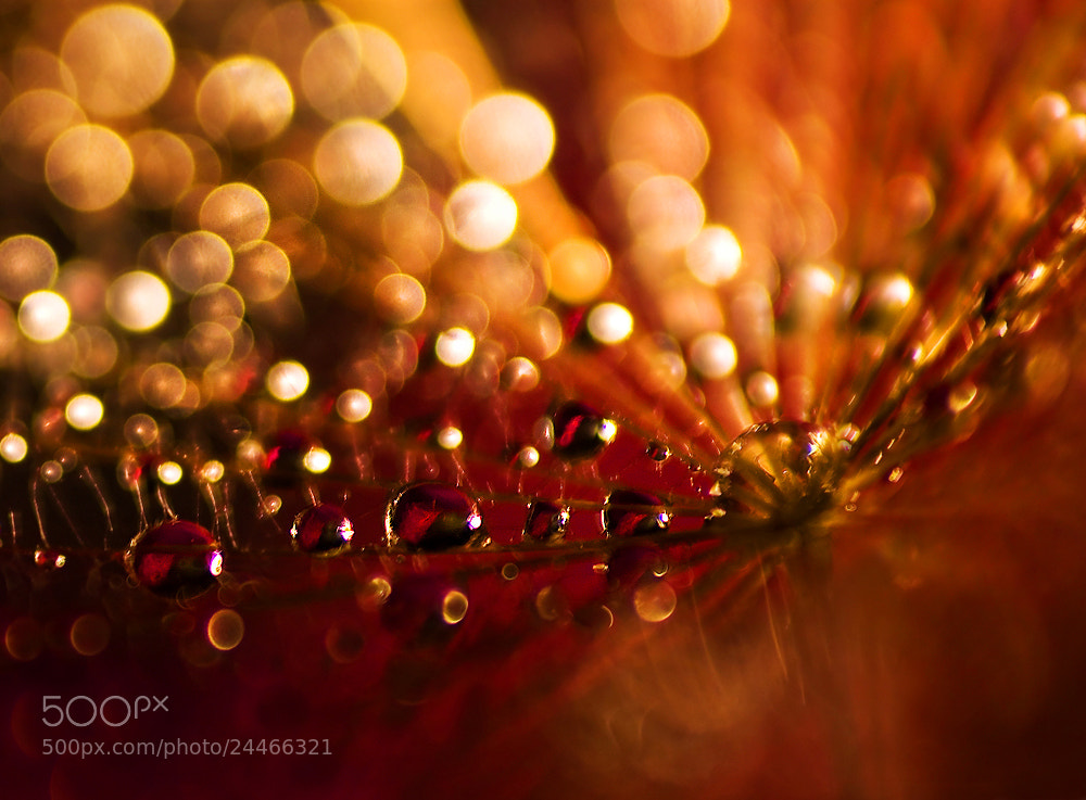 Photograph String of the pearls by Marcsi Kesjarne on 500px