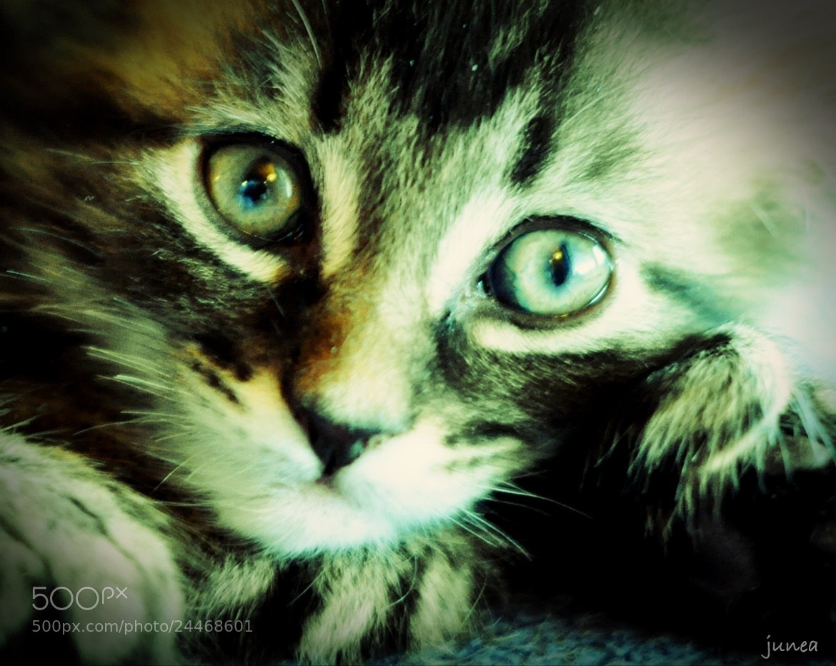 Photograph Lovely kitten by June A on 500px