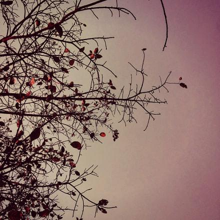 # Red sky #