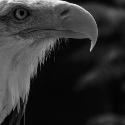 Eagle Concentration, Fujifilm FinePix S4080
