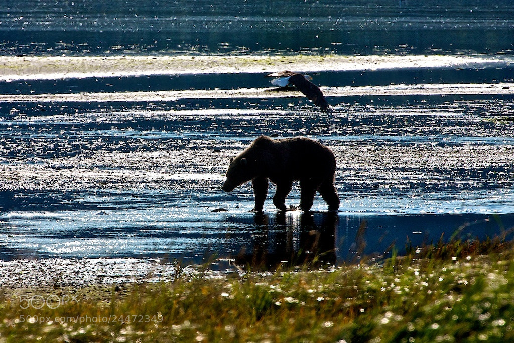 Photograph Eagle And The Bear by Buck Shreck on 500px