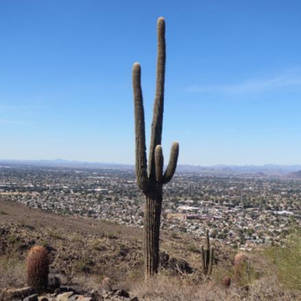 Cactus, Canon POWERSHOT ELPH 530 HS