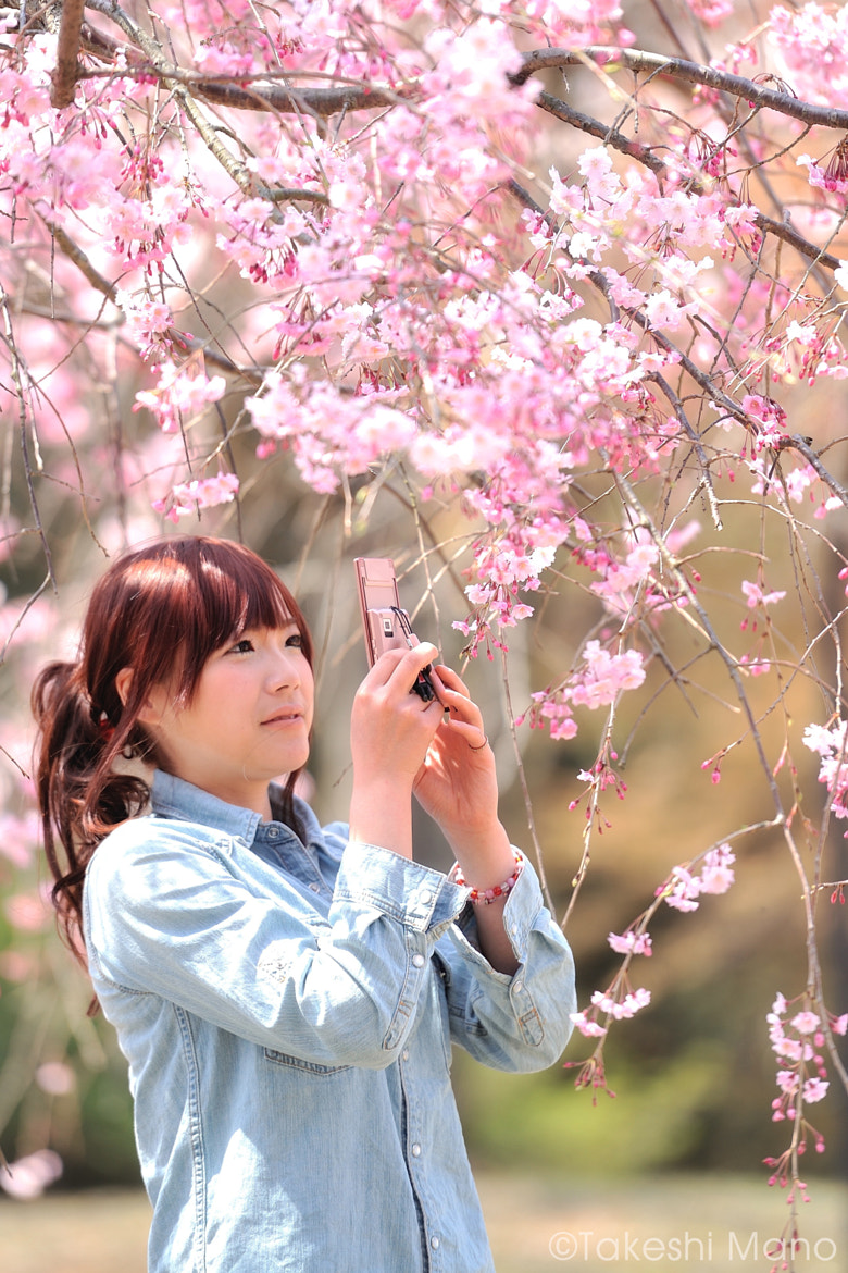 Photograph cherry blossom by Takeshi Mano on 500px
