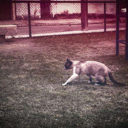 The cat, Sony DSC-W560