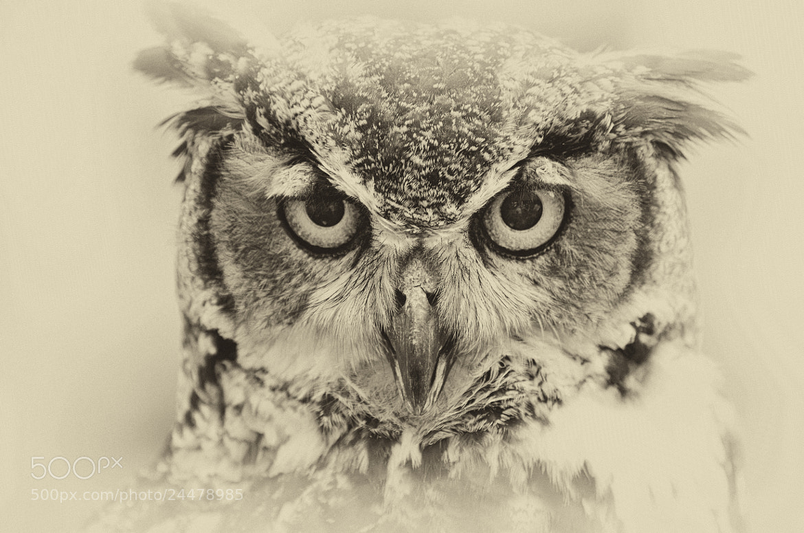 Photograph The Stare by Jeff Clow on 500px