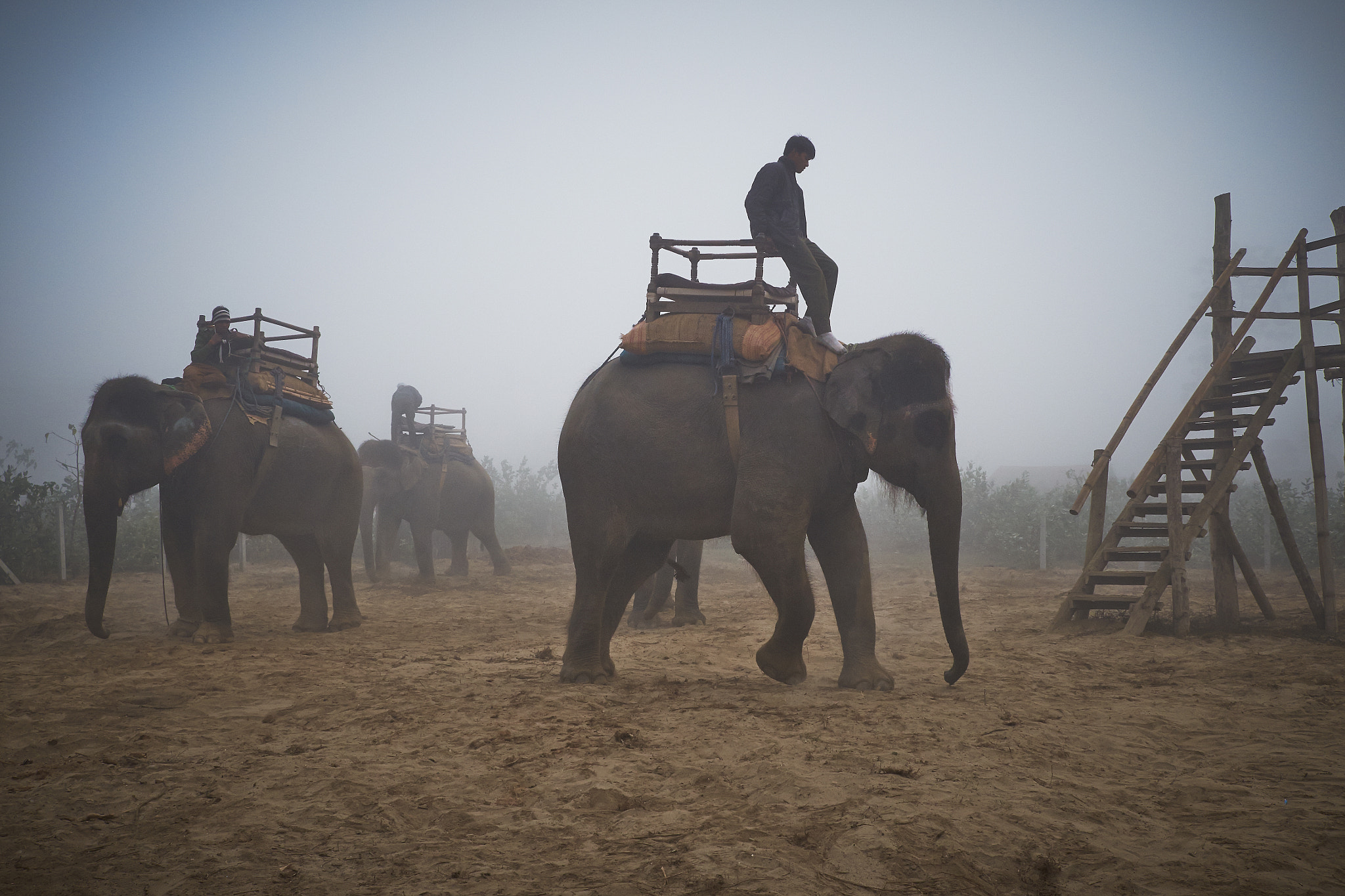 Photograph hathi morning prep by mariano-paul  on 500px