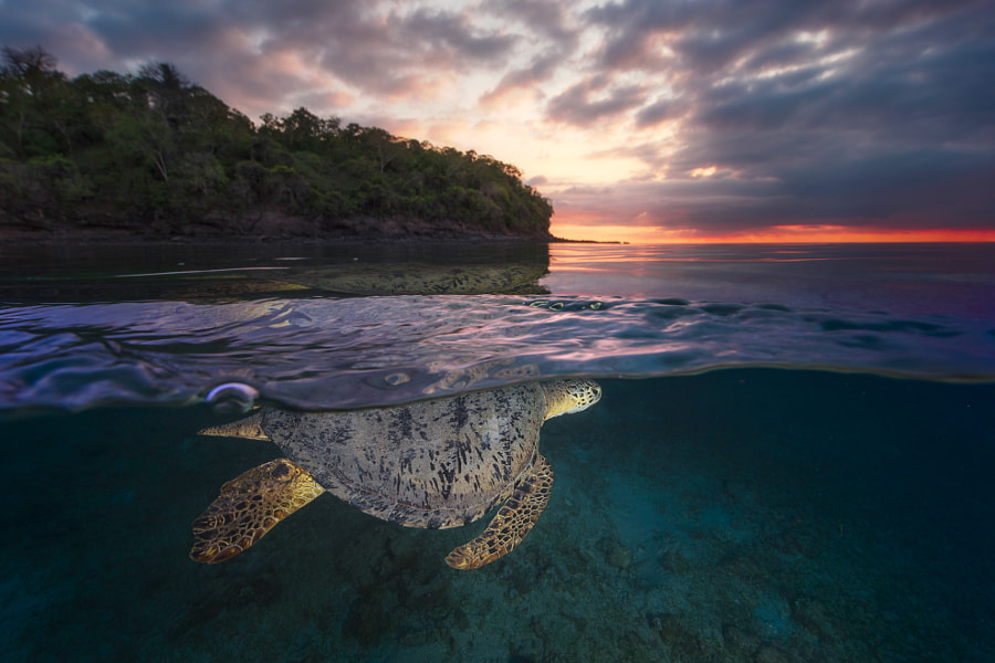 Over the surface - Sea Turtle, автор — Gaby Barathieu на 500px.com