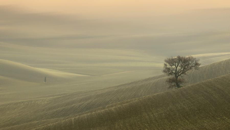 sweet Tuscany, автор — mauro maione на 500px.com