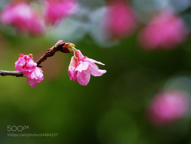 Photograph Flower by liu han-lin on 500px