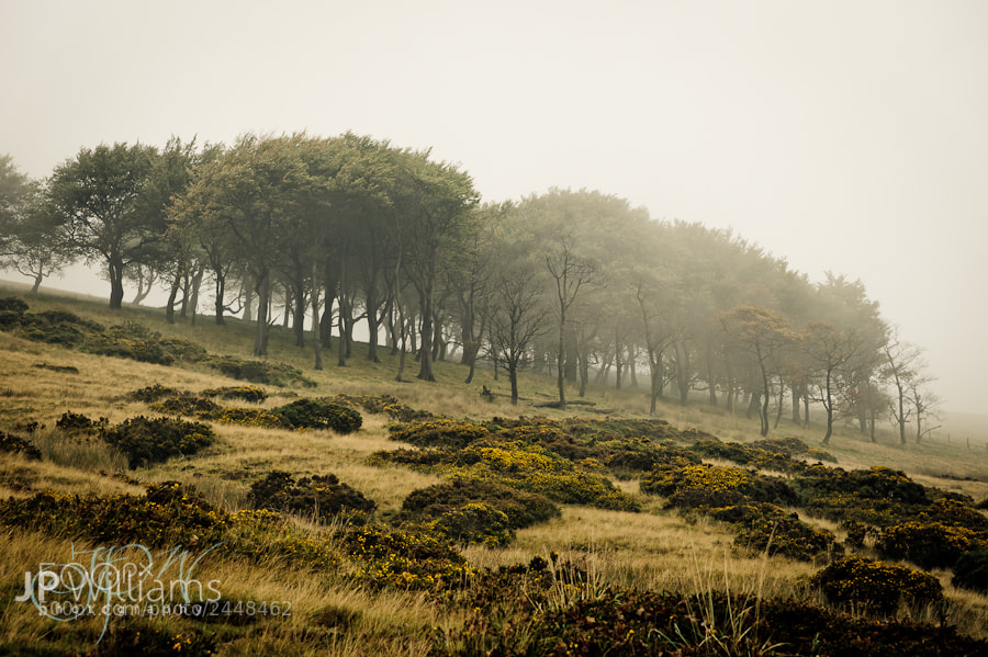 Photograph Misty Copse (detail) by John Paul Williams on 500px