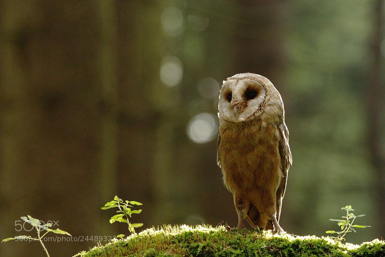 Photograph Tyto alba by Martin Muzik on 500px