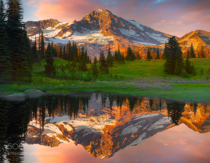 Photograph Mount Rainier Wildflower Season  by Kevin McNeal on 500px