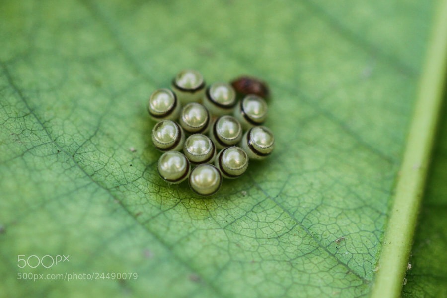 Photograph Eggs by Ravi Meghani on 500px