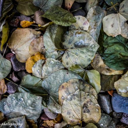 Wet Leaves, Nikon COOLPIX S6100