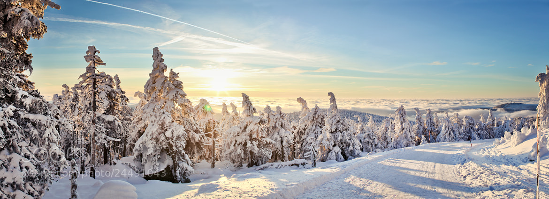 Photograph Winter Sun by Henrik Herr on 500px
