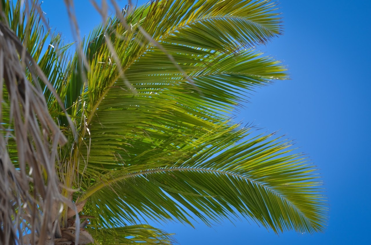 Photograph Palm by Seth Morabito on 500px