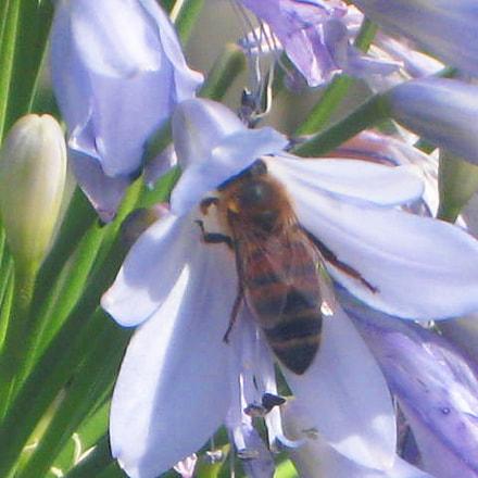 Honey seeker, Canon DIGITAL IXUS 850 IS