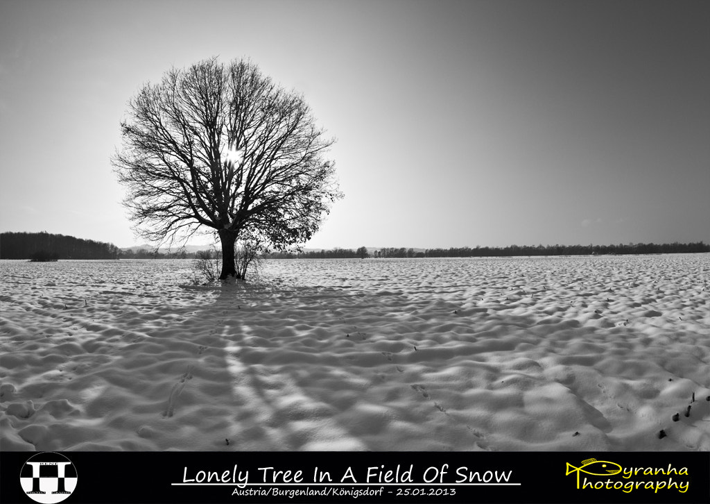 Photograph Lonely Tree In A Field Of Snow by René Pirker on 500px