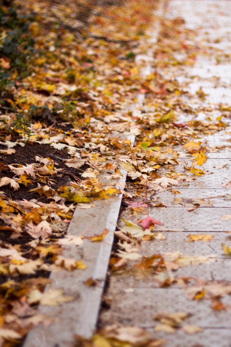 Photograph Fall by Gigi Photography on 500px