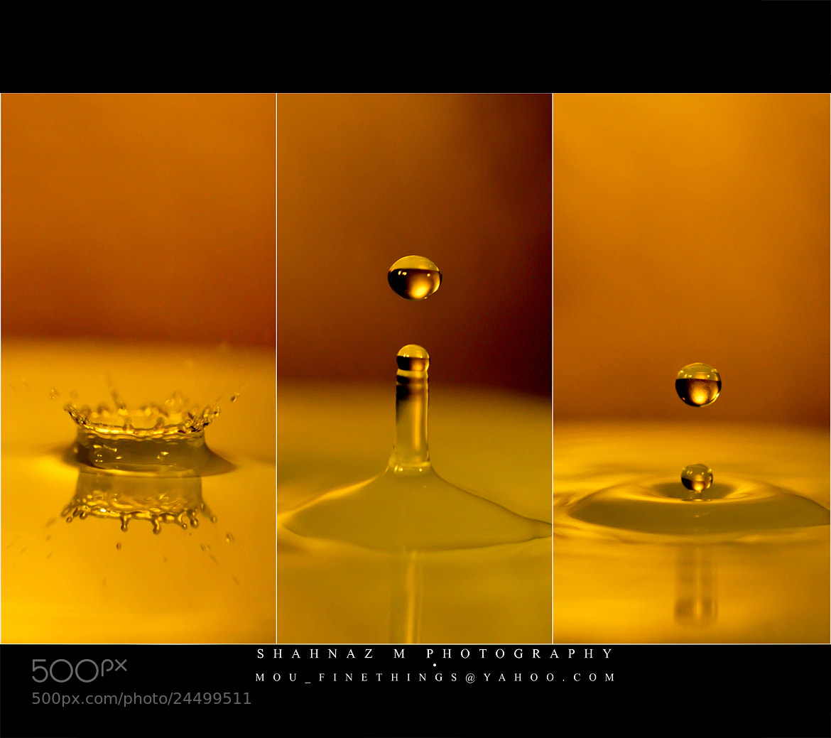 Photograph Splash of GOLD... by Shahnaz M on 500px