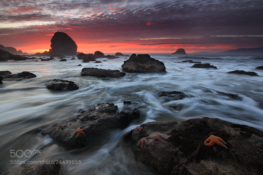 Photograph Starfish Bonanza by Alan Chan on 500px