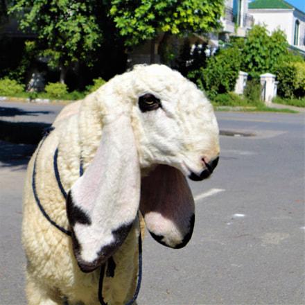 The Sheep, Sony DSC-W350