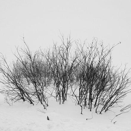 Winter Blues, RICOH PENTAX KP, HD PENTAX-DA 20-40mm F2.8-4 ED Limited DC WR