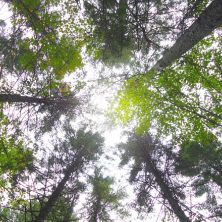Underground Forest, Sony DSC-W320