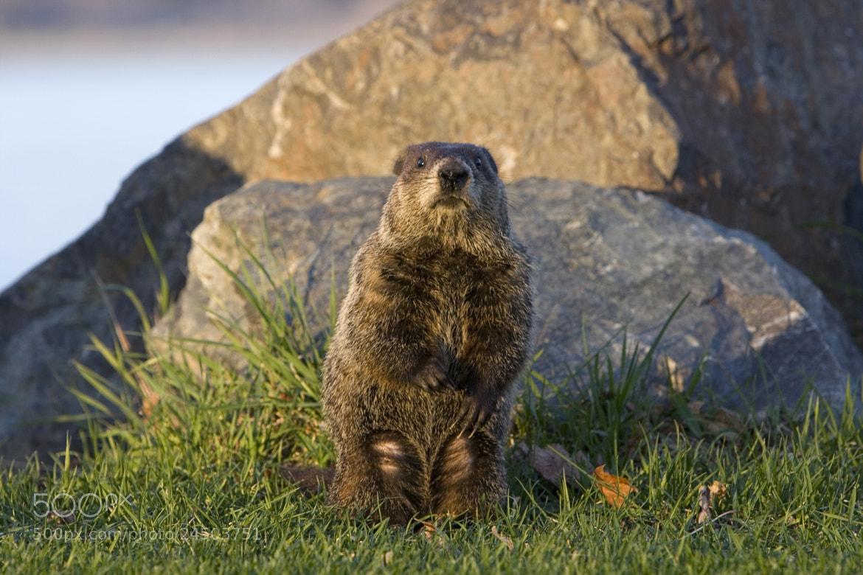 Photograph Groundhog Day by Larry Landolfi on 500px