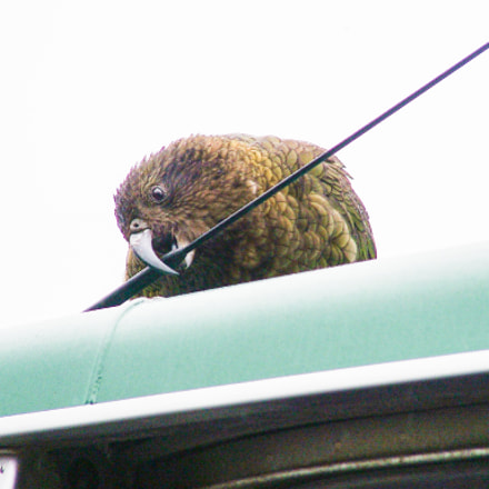 Kea unscrews car aerial, Fujifilm FinePix S20Pro