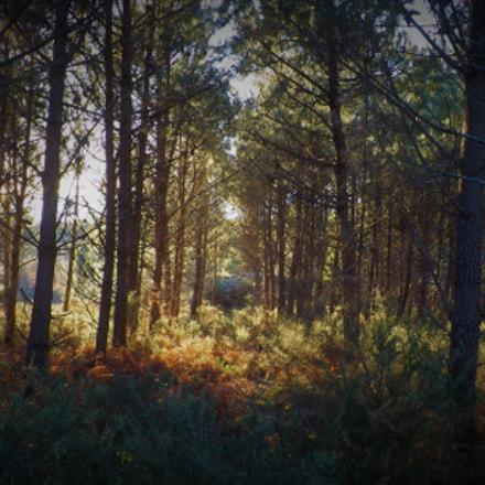 bosque, Fujifilm FinePix SL245