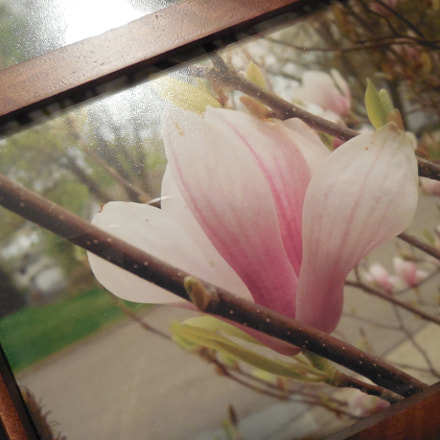 Flower, Nikon COOLPIX L620
