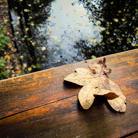Fallen Leaf, Sony DSC-W810