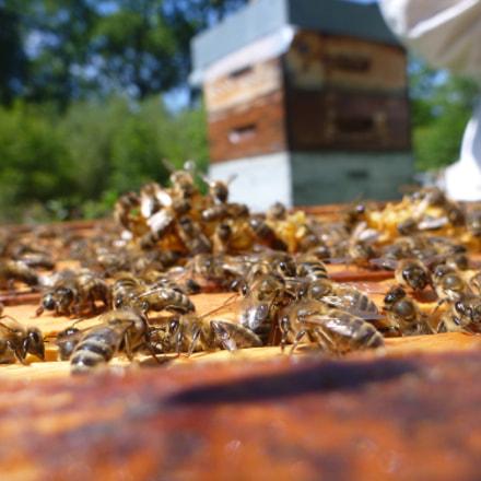 Chaque ruche comporte entre, Panasonic DMC-TS3