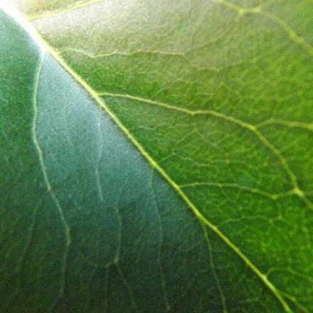 Leaf's Closeup, Fujifilm FinePix S4530