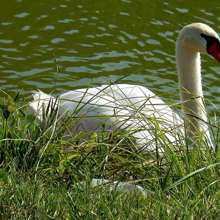 w swan, Nikon COOLPIX S6100